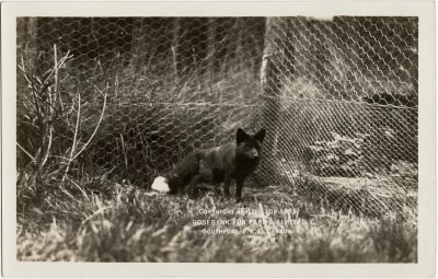 , Copyright applied for 1919. Rosebank Fur Farms Limited. Southport, P.E.I. Canada. (1996), PEI Postcards