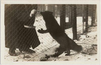 , Rosebank Fur Farms, Limited, Southport, P.E.I. (1998), PEI Postcards