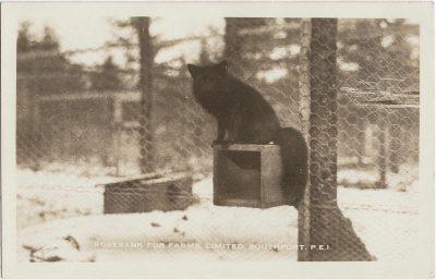 , Rosebank Fur Farms, Limited. Southport, P.E.I. (2000), PEI Postcards