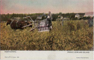 , Harvesting Prince Edward Island (2043), PEI Postcards