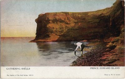 , Gatheirng Shells Prince Edward Island (2047), PEI Postcards