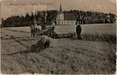 , Harvest Scene, Tignish, P.E. Island (2063), PEI Postcards