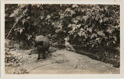 , Rosebank Fur Farms Limited, Southport, P.E.I. (2201), PEI Postcards