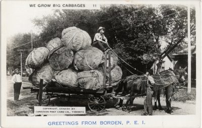 , We Grow Big Cabbages. Greetings from Borden, P.E.I. (2282), PEI Postcards