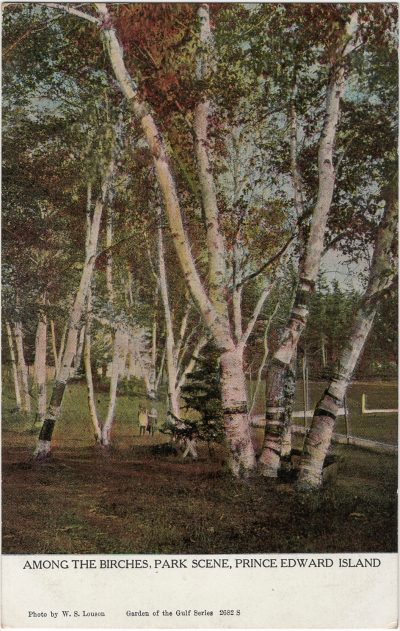 , Among the Birches, Park Scene, Prince Edward Island (2345), PEI Postcards