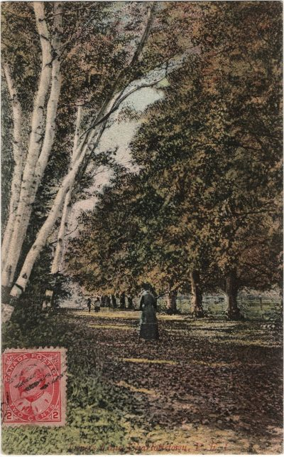 , Lovers Lane Charlottetown P.E.I. (2292), PEI Postcards