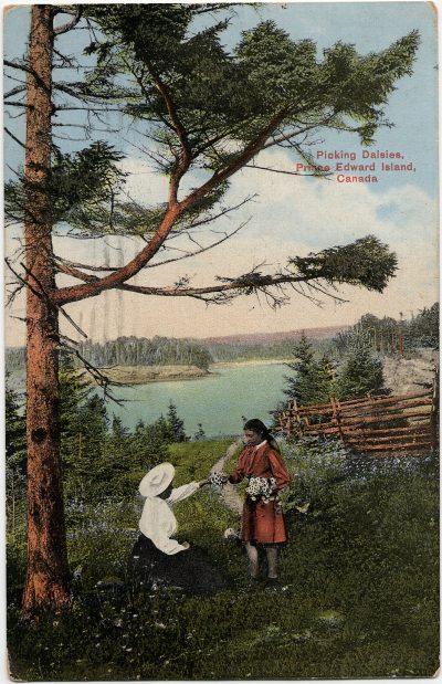 , Picking Daisies, Prince Edward Island, Canada (2277), PEI Postcards