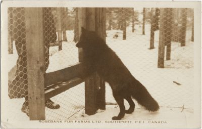 , Rosebank Fur Farms, Ltd. Southport, P.E.I. Canada. A Close-Up View (2300), PEI Postcards