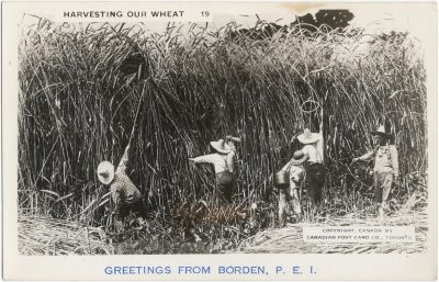 , Harvesting Our Wheat. Greetings from Borden, P.E.I. (2281), PEI Postcards