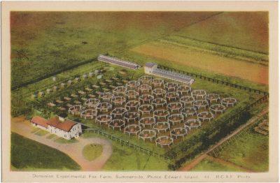 , Dominion Experimental Fox Farm, Summerside, Prince Edward Island. R.C.A.F. Photo. (2487), PEI Postcards