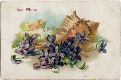 , Best Wishes (2428), PEI Postcards