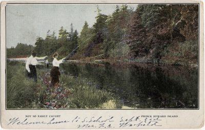 , Not so easily caught. Prince Edward Island. (2461), PEI Postcards