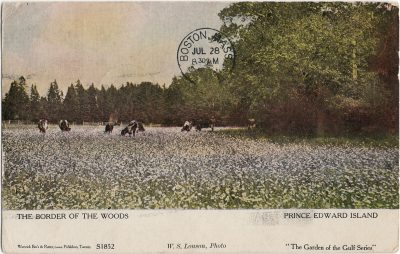 , The Border of the Woods Prince Edward Island (2441), PEI Postcards