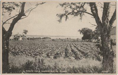 , Potato Field, Marshfield, P.E. Island. (2493), PEI Postcards