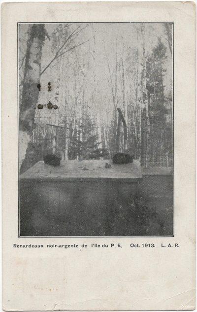, Renardeaux noir-argente de l'Ile du P.E. Oct 1913. L.A.R. (2529), PEI Postcards