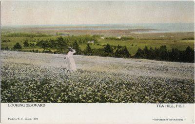 , Looking Seaward Tea Hill, P.E.I. (2581), PEI Postcards