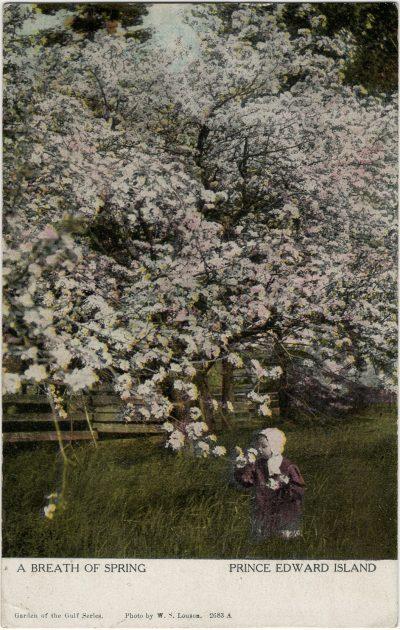 , A Breath of Spring Prince Edward Island (2647), PEI Postcards