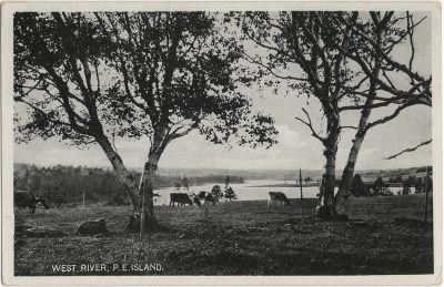 , West River, P.E. Island. (2682), PEI Postcards