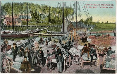 """, Shipping at Montague, P.E. Island. """"A Busy Day."""" (2714), PEI Postcards"""