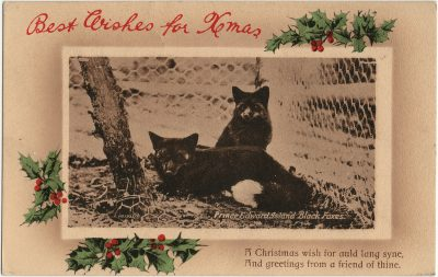 , Best Wishes for Xmas Prince Edward Island Black Foxes A Christmas wish for auld lang syne, And     greetings from a friend of thine. (2822), PEI Postcards