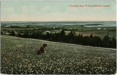 , Pownall Bay, Prince Edward Island (2882), PEI Postcards