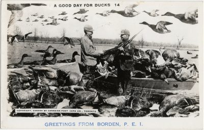 , A Good Day for Ducks Greetings from Borden, P.E.I. (2864), PEI Postcards