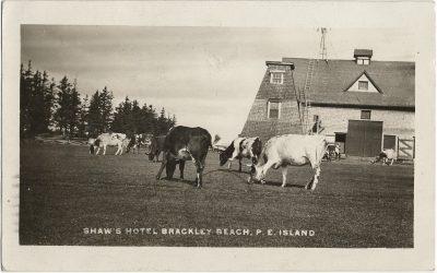 , Shaw's Hotel Brackley Beach, P.E. Island (2897), PEI Postcards
