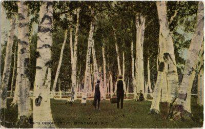 , Gregor's Birch Grove, Montague, P.E.I. (2909), PEI Postcards