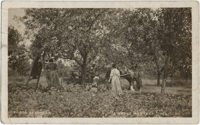 , Photo by Louson The Apple Harvest P.E. Island (2979), PEI Postcards