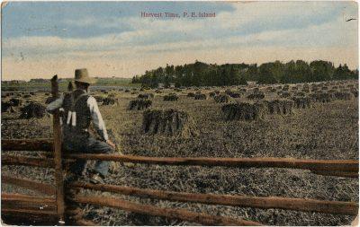 , Harvest Time, P.E. Island (2952), PEI Postcards