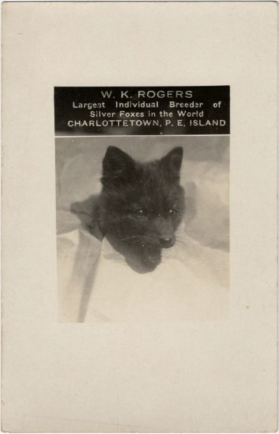 , W.K. Rogers Largest Individual Breeder of Silver Foxes in the World Charlottetown, P.E. Island (2938), PEI Postcards