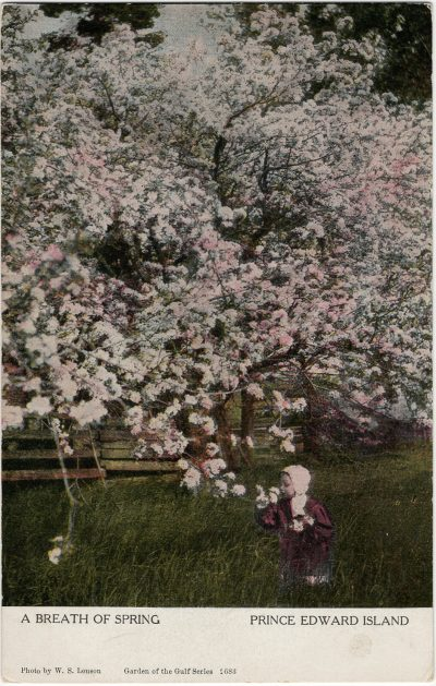 , A Breath of Spring (2989), PEI Postcards