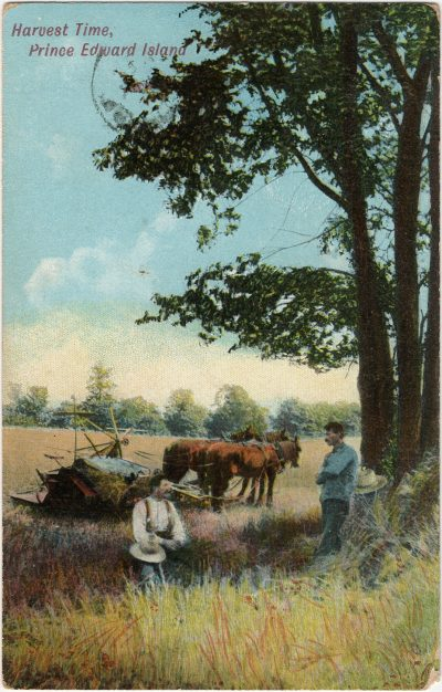 , Harvest Time, Prince Edward Island (3008), PEI Postcards