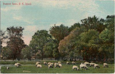 , Pastoral Scene, P.E. Island (3006), PEI Postcards