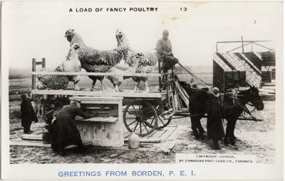 , A Load of Fancy Poultry Greetings from Borden, P.E.I. (3080), PEI Postcards