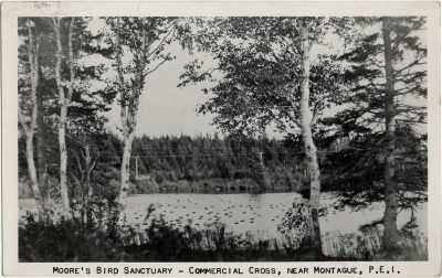 , Moore's Bird Sanctuary – Commercial Cross, near Montague, P.E.I. (3046), PEI Postcards