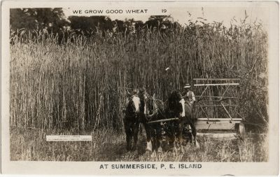 , We Grow Good Wheat at Summerside, P.E. Island (3140), PEI Postcards