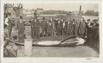 , Men standing behind large whale on Summerside Pier, handwritten 1916 to bottom right. (3104), PEI Postcards