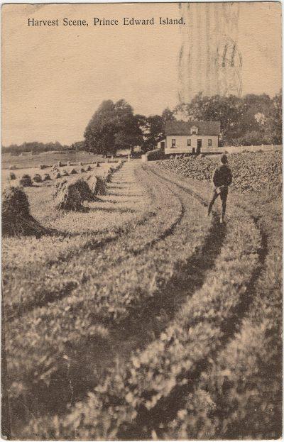 , Harvest Scene, Prince Edward Island. (3200), PEI Postcards