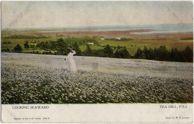 , Looking Seaward Tea Hill, P.E.I. (3199), PEI Postcards