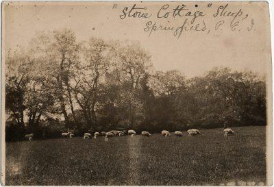 ", ""Stone Cottage"" Sheep, Springfield, P.E.I. (3226), PEI Postcards"