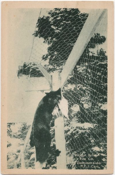 , Victor Silver Fox Co., Summerside P.E.I. Can. (0013), PEI Postcards